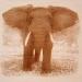 Fa elefánt kép/1